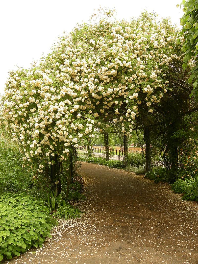 Rose garden  08 001