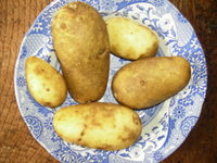 Victoria_and_first_taters_002
