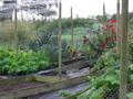 October_allotment_004