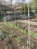 The_herb_garden_003_3